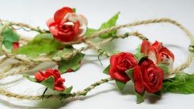 Rose isolate Immagini Stock