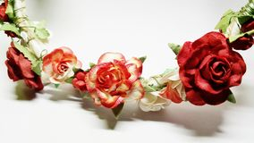 Rose isolate Immagine Stock Libera da Diritti