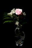 Rose Isolated cor-de-rosa contra o preto foto de stock royalty free
