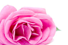 Rose isolated on white background Stock Photo