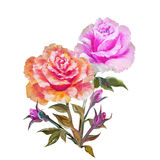 Rose isolated on white, oil painting Royalty Free Stock Photography