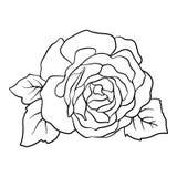 rose izolacji Konturu rysunek projekta ilustraci zapasu use wektor twój Zdjęcia Stock