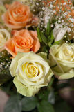 Rose jaune-clair Photographie stock