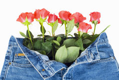 Rose, Jeans Stock Photography