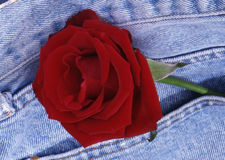 Rose in jeans. Royalty Free Stock Photography