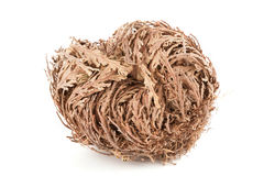 Rose of Jericho. Real Rose of Jericho on white background Stock Photos