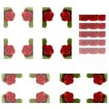 Rose kant Royaltyfri Fotografi