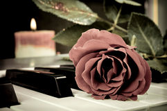 Rose on the keyboard Stock Photography
