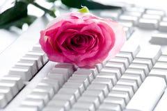 Rose on keyboard Royalty Free Stock Image