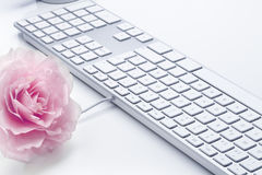 Rose and keyboard computer Stock Image