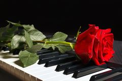 Rose on keyboard of the digital piano on black background Stock Images