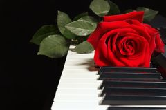 Rose on keyboard of the piano on black background Royalty Free Stock Photography