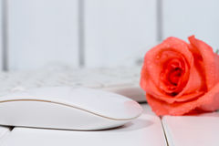 Rose on the keyboard Stock Image