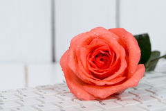 Rose on the keyboard Royalty Free Stock Images