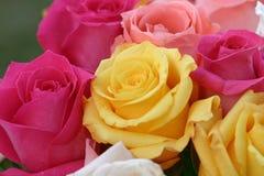 rose kolorowa tło Zdjęcia Royalty Free