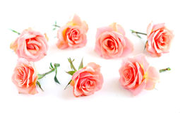rose kwiatów Fotografia Royalty Free