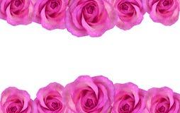 rose kwiecisty graniczny Obrazy Royalty Free