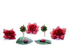 Rose and Ladybird. Red roses and ladybirds reserved Stock Photography