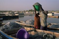 Rose lake - Senegal Royalty Free Stock Images