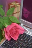 Rose on laptop Stock Image