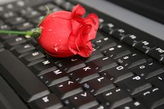 ROSE ON A LAPTOP royalty free stock photos