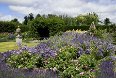 Rose and lavender garden. English rose and lavender garden in summer Stock Photo