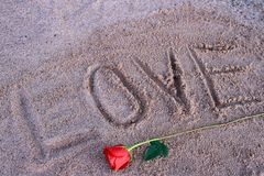 Rose Laying roja en la arena de la playa Imagen de archivo libre de regalías