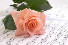 Rose lays on a musical paper Royalty Free Stock Photography