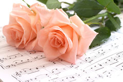 Rose lays on a musical paper Royalty Free Stock Photos