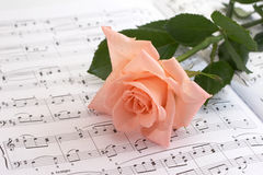 Rose lays on a musical paper royalty free stock images