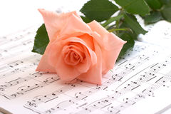 The rose lays on musical paper Royalty Free Stock Photo