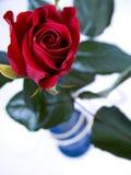 Rose - le rouge a monté dans le vase images stock