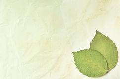 Rose leaves on the old paper background Stock Photos