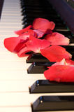 Rose leaves on the piano Royalty Free Stock Photos