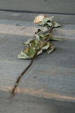 Rose left in one of the wooden barracks - Auschwitz Birkenau stock photography