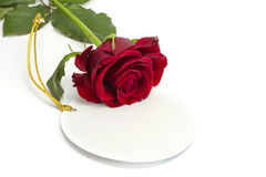 The rose lies on a card. On the isolated white background Royalty Free Stock Image