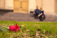 A rose lies on the green grass, and in the background two people. A red rose lies on the green grass, and in the background two people in love with each other Royalty Free Stock Images