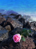 The rose lies on stones on the sea background. Stock Image