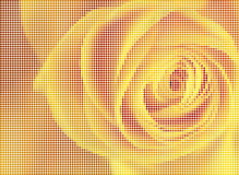 Rose. Light illuminated  the background from beautiful translucent flowers Royalty Free Stock Photos