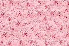 Rose light pink background. Texture Royalty Free Stock Image