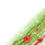 Rose line corner with ribbon. Corner of floating rose lines with rose buds and a red present ribbon over a bokeh background fading into white Stock Image