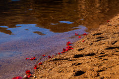 Rose Lined Shore Royalty Free Stock Photo