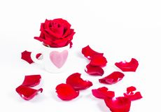 Rose in love coffee cup. Cup of love valentine concept Stock Images