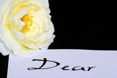 Rose on love letter. Cream-white rose on love letter, dear written Stock Photography