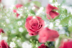 Rose of love. Rose for valentine , wedding flower Royalty Free Stock Image