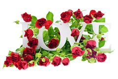 Rose with LOVE Word Isolated on White Background Royalty Free Stock Photography