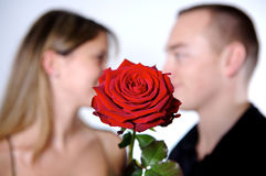 Rose lovers Stock Images