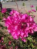 Rose lumineux photographie stock libre de droits