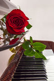 Rose is lying on keys of piano Royalty Free Stock Photo