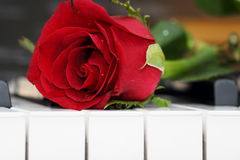 Rose lying on piano, romance Royalty Free Stock Photo